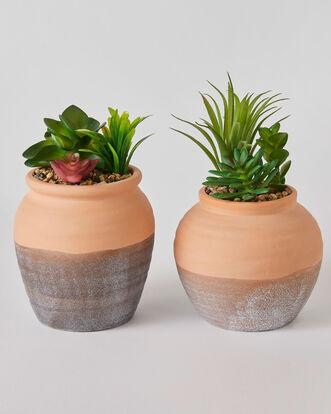 Set of 2 Succulents in Terracotta Planter