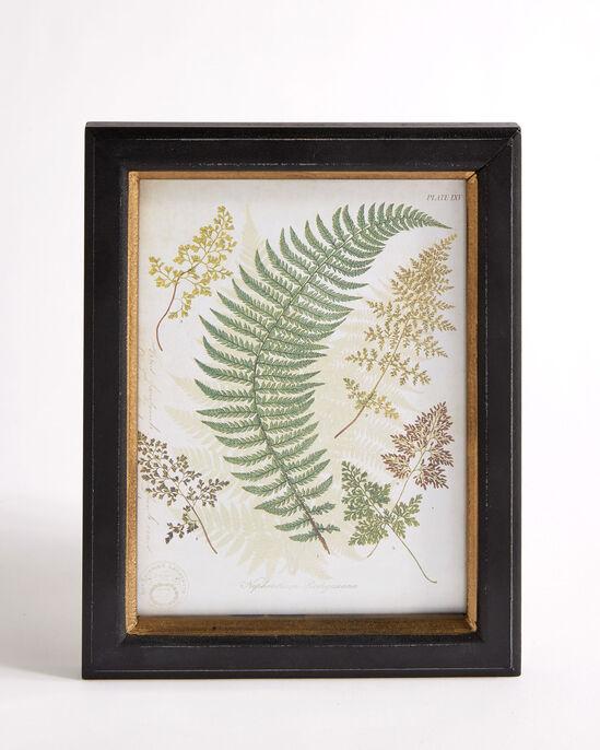 Set of 3 Framed Fern Prints